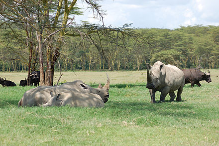 "NEW! ""Annual Guided Safaris With Owners"" Yes! United States - Africa"