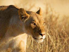 Check Safari Gallery 1