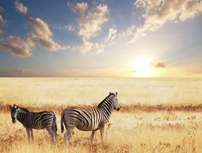 Check Safari Gallery 5