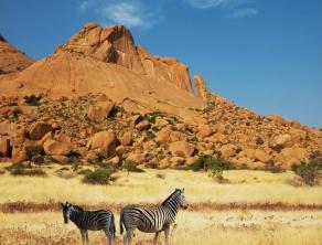 Check Safari Gallery 6