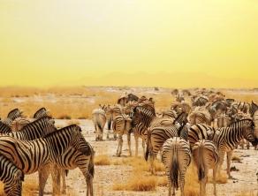 Check Safari Gallery 7