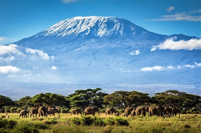 4 Day Safari Special - Get A Quote