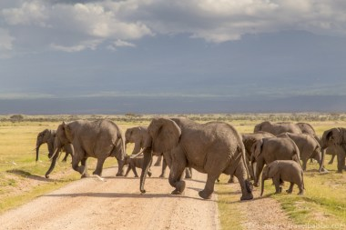 elephants at Amboseli7